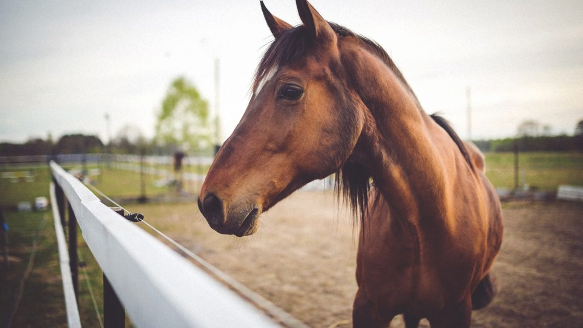 Den billigste måde at have hest på